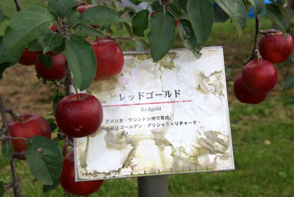 実りの秋。弘前市りんご公園♪_a0136293_12331110.jpg