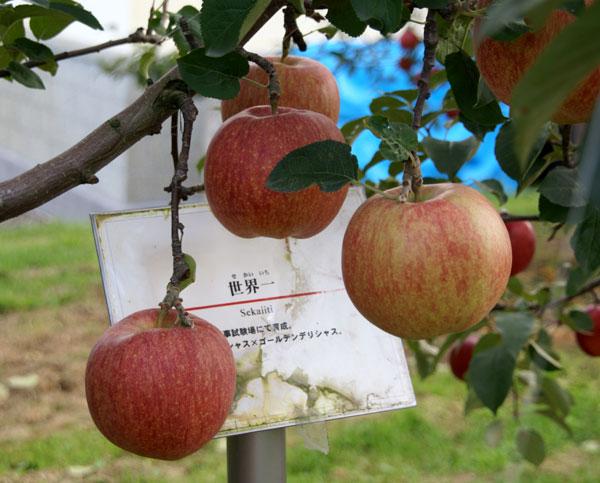 実りの秋。弘前市りんご公園♪_a0136293_1242266.jpg