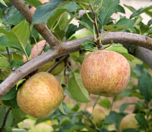 実りの秋。弘前市りんご公園♪_a0136293_13183964.jpg