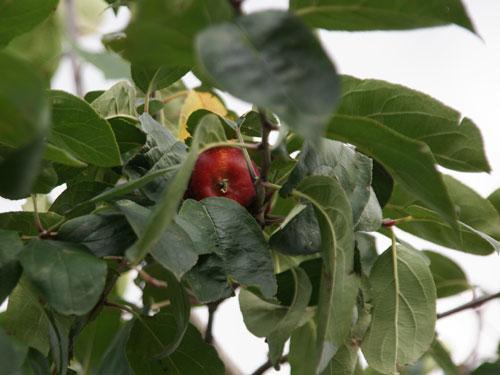 実りの秋。弘前市りんご公園♪_a0136293_13252742.jpg