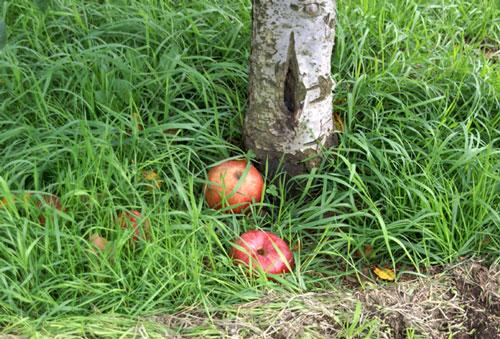 実りの秋。弘前市りんご公園♪_a0136293_13291253.jpg