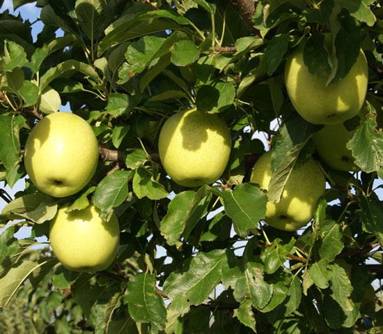 実りの秋。弘前市りんご公園♪_a0136293_13314835.jpg
