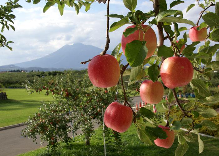 実りの秋。弘前市りんご公園♪_a0136293_13342720.jpg