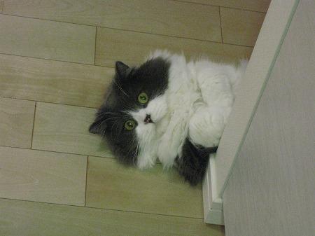 私がキッチンへ入ると、ご飯の催促がはじまるんです。_e0160595_23544673.jpg