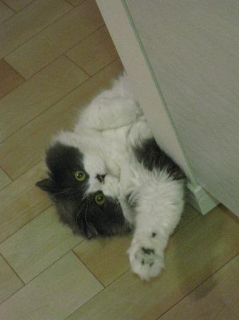 私がキッチンへ入ると、ご飯の催促がはじまるんです。_e0160595_23545028.jpg