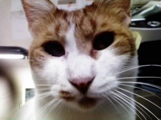 愛猫の食欲_d0122797_1382460.jpg