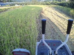柿の収穫。時々稲刈り。_f0018099_174319.jpg