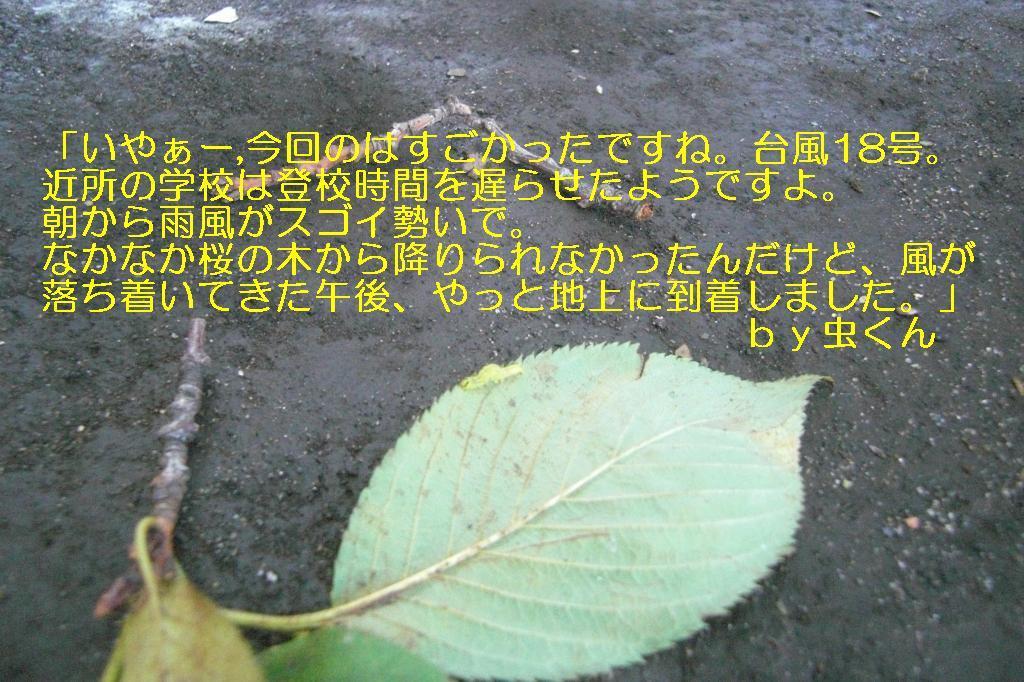 f0140927_20372074.jpg