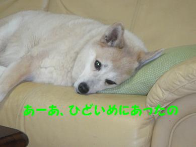 c0211642_1841738.jpg