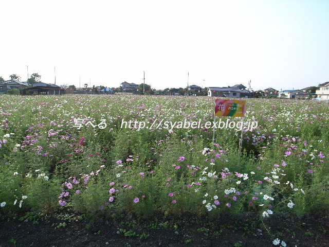 c0153764_20105558.jpg