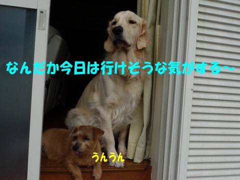 d0043478_21454485.jpg