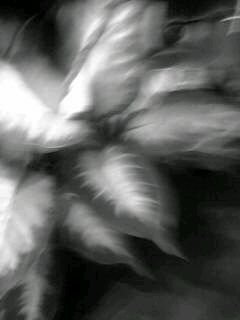f0100480_215927.jpg