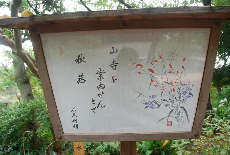 向島百花園と浅草、その他_c0187781_23402854.jpg