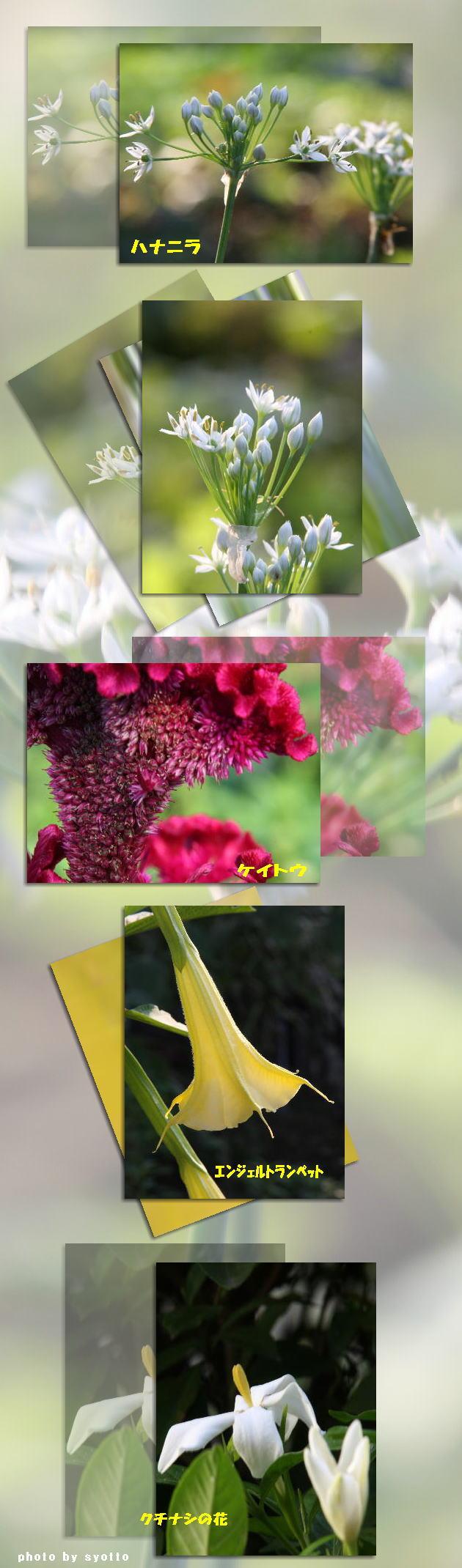 f0164592_22152238.jpg