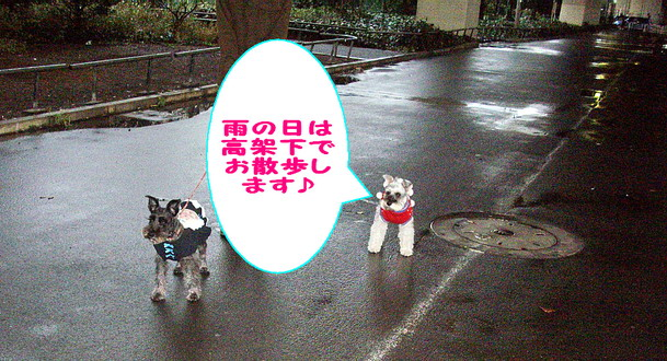 c0138198_225483.jpg