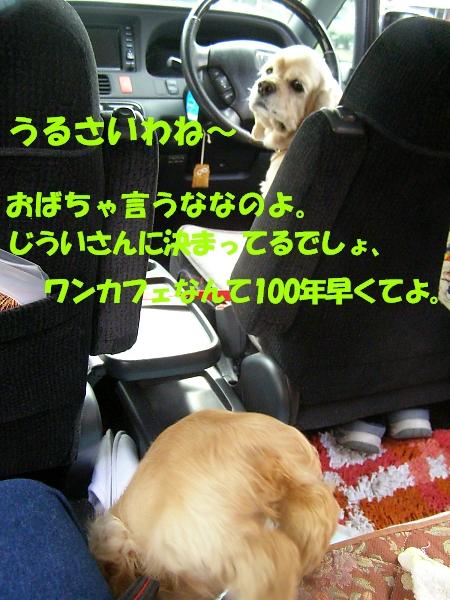 b0067012_648398.jpg