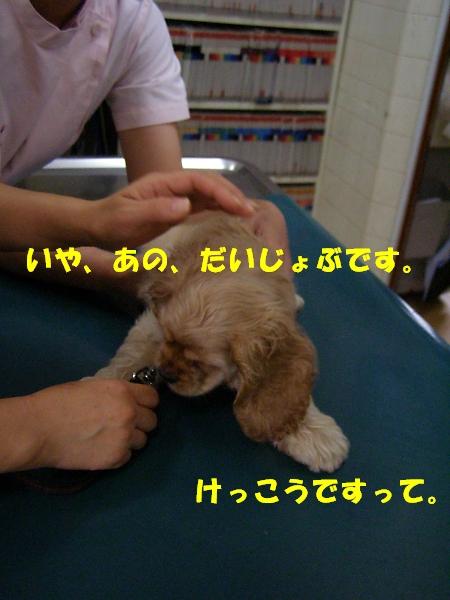 b0067012_724746.jpg