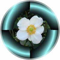 ブラインド模様の円形枠