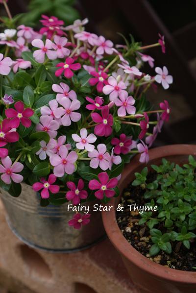 Fairy Star _d0107929_22275135.jpg