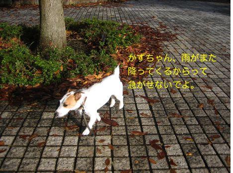 c0179472_10161059.jpg