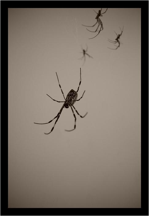 Spider-Man_c0170584_2047587.jpg