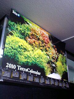 Tetra 2010年ポスターカレンダー、無料配布中!_b0141806_0525085.jpg