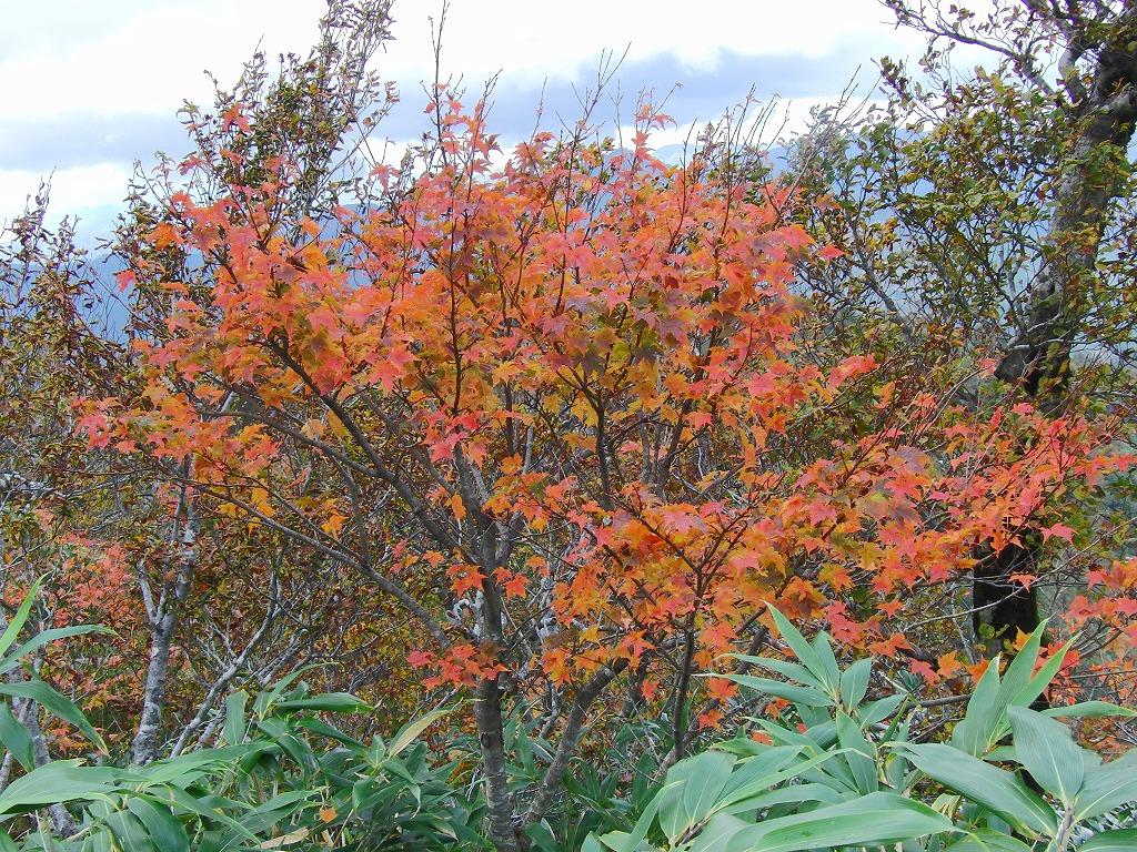 さぁ、紅葉を見に行こうよー!_f0101226_17414650.jpg