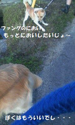 b0127531_949255.jpg
