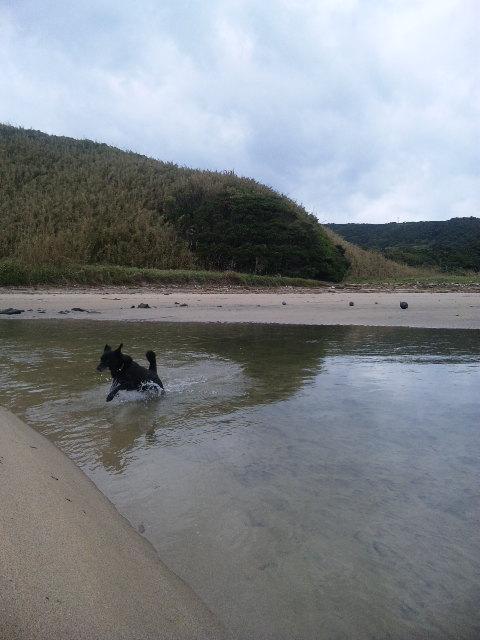 台風後のビーチ_b0181141_0921.jpg
