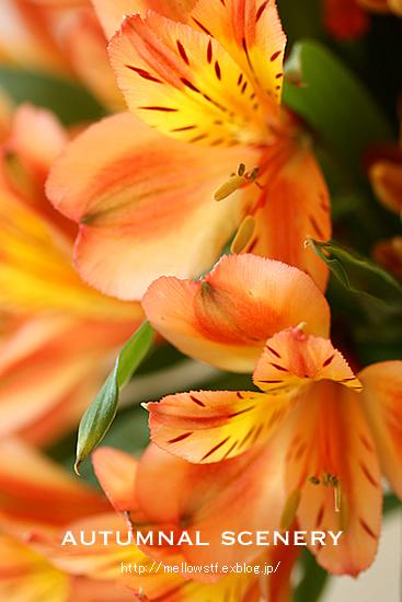 秋色アレンジ。_d0124248_1322242.jpg