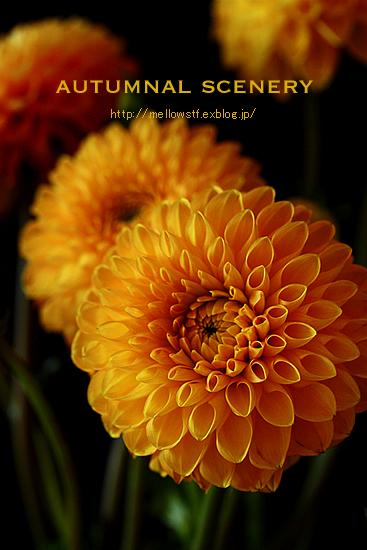 秋色アレンジ。_d0124248_1365127.jpg