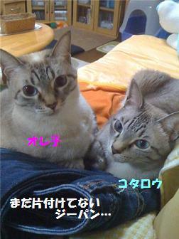 a0113070_0384241.jpg