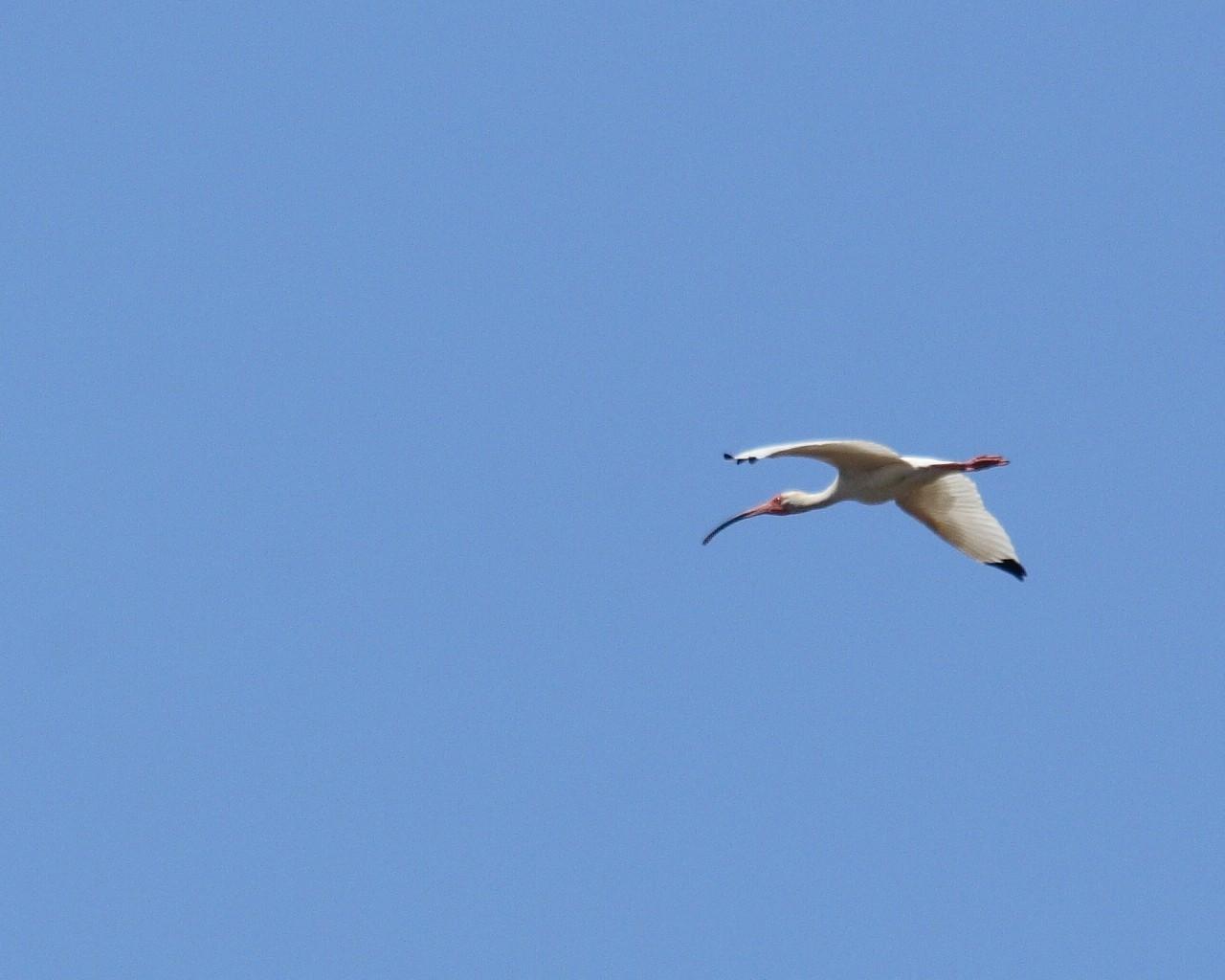 この春フロリダで出会った鳥_f0105570_956232.jpg
