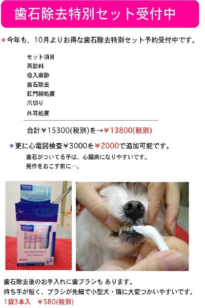 b0002179_1640328.jpg