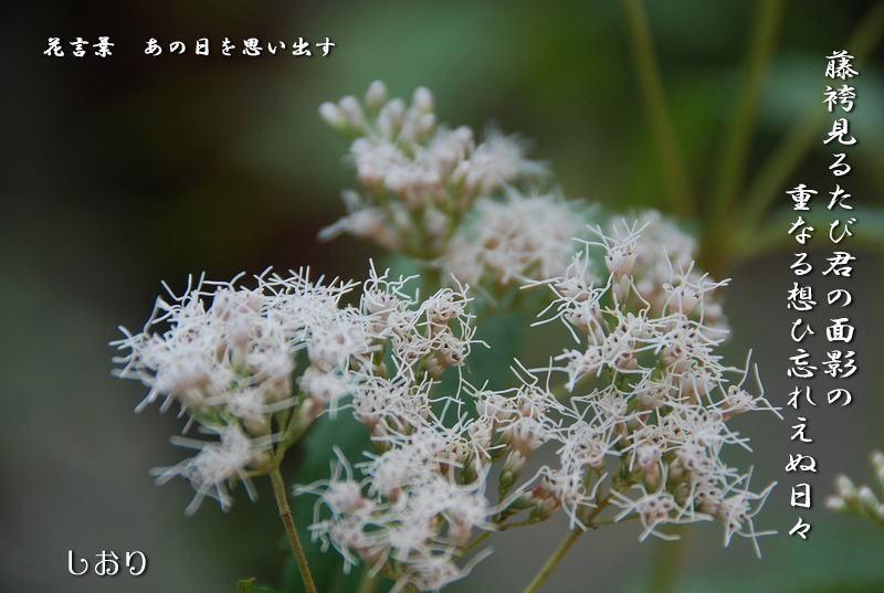 向島百花園と浅草、その他_c0187781_119297.jpg