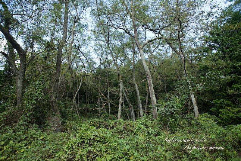 09/10/4        倒木の森_c0137403_19231336.jpg