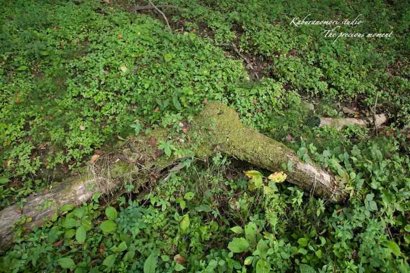 09/10/4        倒木の森_c0137403_19293999.jpg