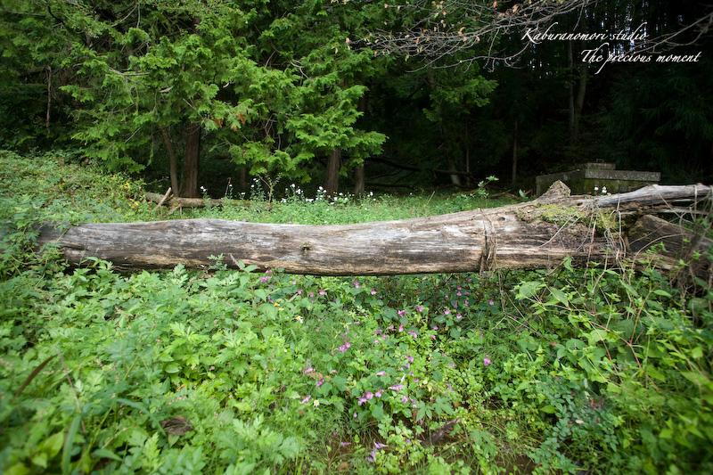 09/10/4        倒木の森_c0137403_1929523.jpg