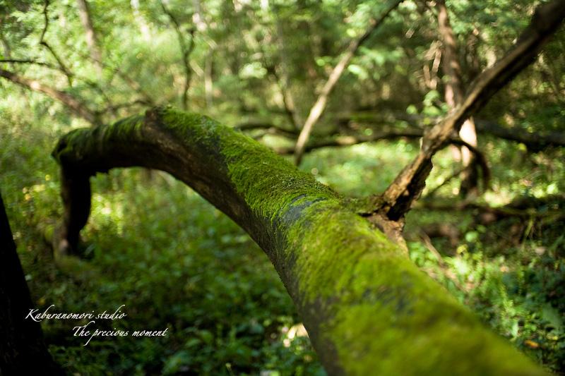 09/10/4        倒木の森_c0137403_19303815.jpg