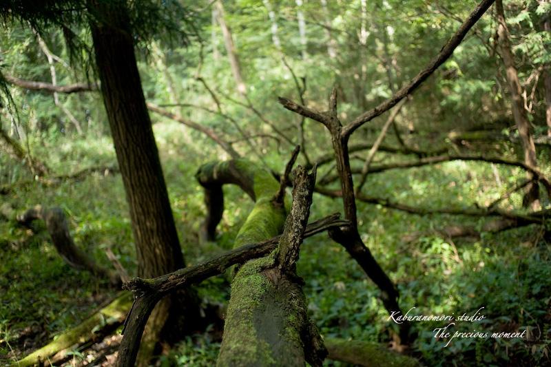 09/10/4        倒木の森_c0137403_193058.jpg