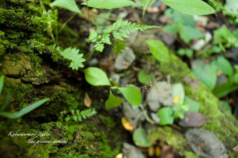 09/10/4        倒木の森_c0137403_19312756.jpg