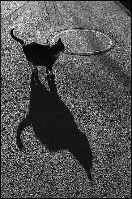 猫街_f0204015_0255945.jpg