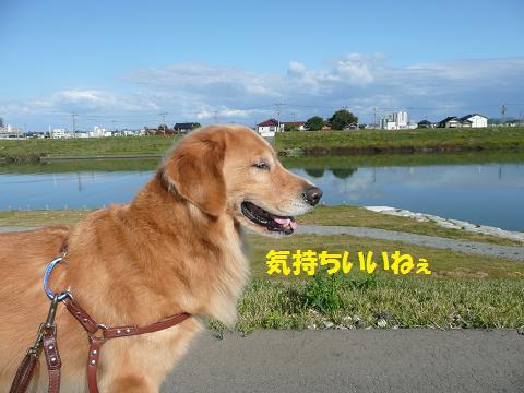 f0114128_2025281.jpg