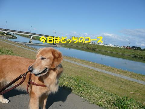 f0114128_2026344.jpg