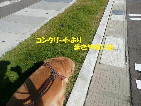 f0114128_20341390.jpg