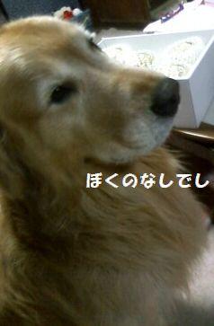 b0127531_10491346.jpg