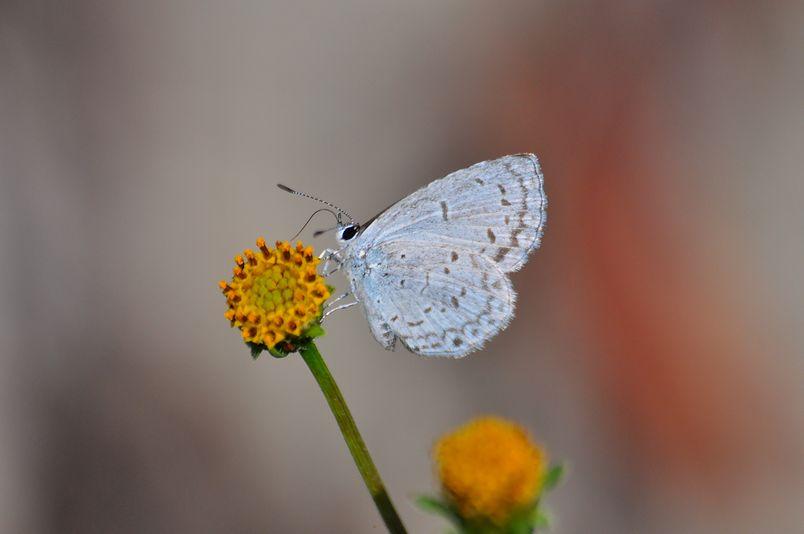 10月10日(晴れ)タイトル:和歌山の蝶その1_f0105542_11544739.jpg