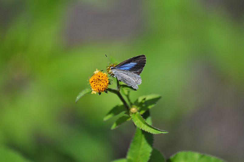 10月10日(晴れ)タイトル:和歌山の蝶その1_f0105542_11552197.jpg