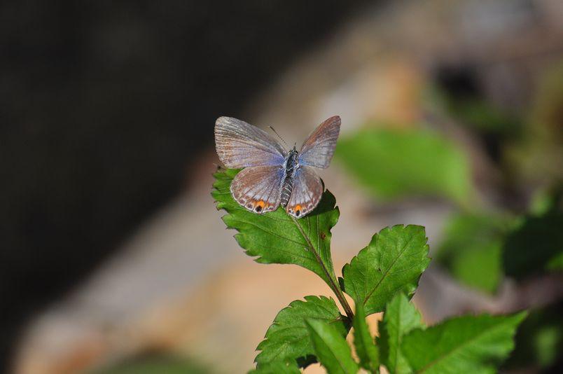10月10日(晴れ)タイトル:和歌山の蝶その1_f0105542_11581885.jpg