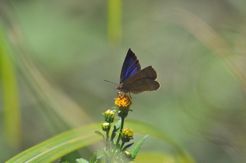 10月10日(晴れ)タイトル:和歌山の蝶その1_f0105542_11594758.jpg